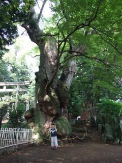 村田町白鳥神社