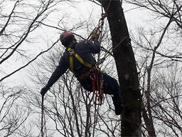 ロープアクセス クライミング 木登り 特殊伐採