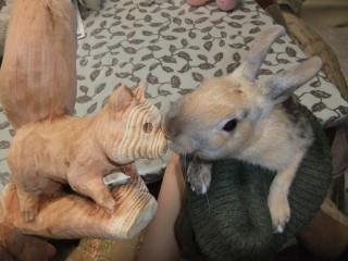 リスのお鼻をカジカジ、ミニウサギのポォーちゃん