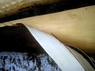 杉の皮剥き