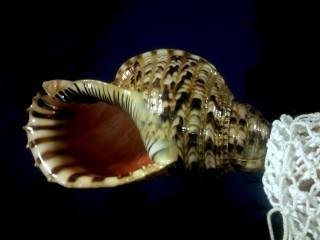 蔵王に轟く法螺貝の調