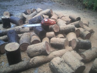 チェーンソーで薪作り、丸太の玉切り