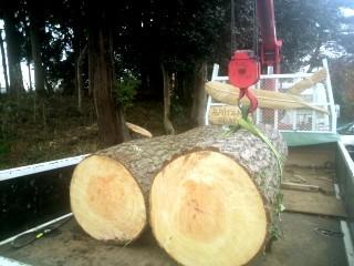 連理の木、赤松でチェーンソーカービング